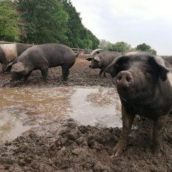 besserfleisch ist in den Kieler Nachrichten