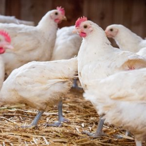 besserfleisch.de Bio Fleisch aus Weidehaltung