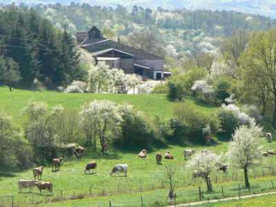 Der Schwalbenhof